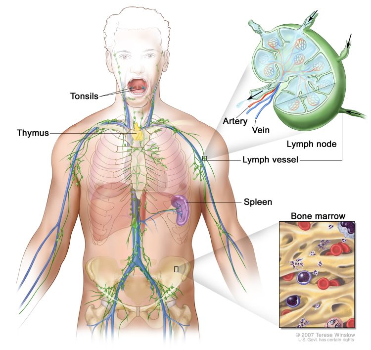 Lymphatic Drainage Massage – Why Do We Need It?Hypervibe Australia