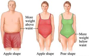 belly fat in women and men