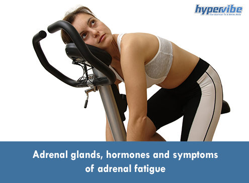Adrenal glands, hormones and symptoms adrenal fatigue