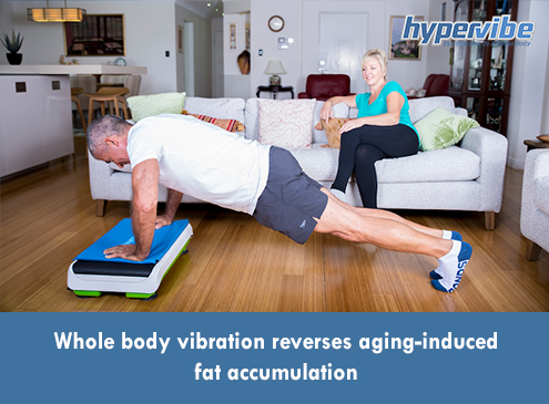 wbv decreases aging induced visceral adiposity fat percentage